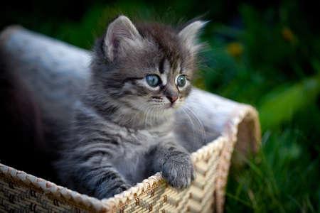 草の上のバスケットに小さな猫