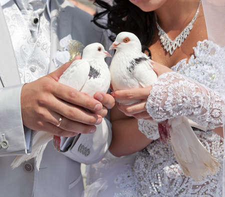 devoted: Wedding pigeons in hands of the groom and the bride  Stock Photo