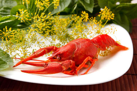repast: cooked crayfish with fennel and mint  Stock Photo