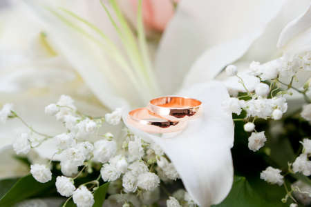 Gold wedding rings on flower  photo