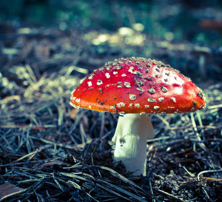 inedible: inedible hazardous to health mushrooms in the forest