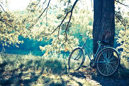 Biking in the forest under the sun. photo