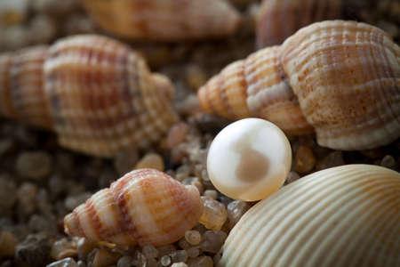 cockleshells: The pearl lies on sand with cockleshells