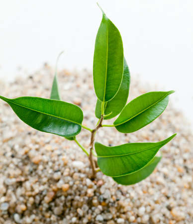 young plant grows from sand  photo