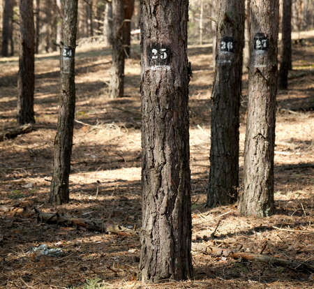 marked: Trees marked for cutting down