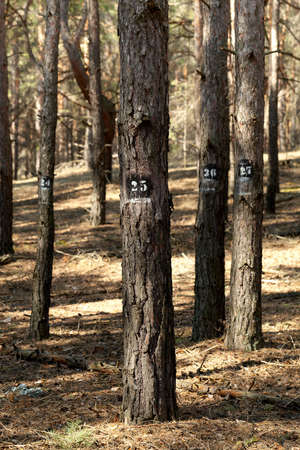 marked down: Trees marked for cutting down