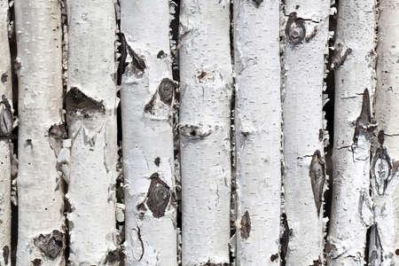 wall from birch logs
