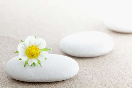 The group of stones with a flower lies on small sea sand photo