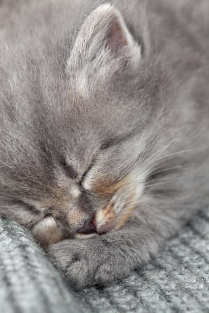 The kitten sleeps  photo