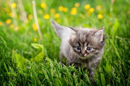 草の小さな猫