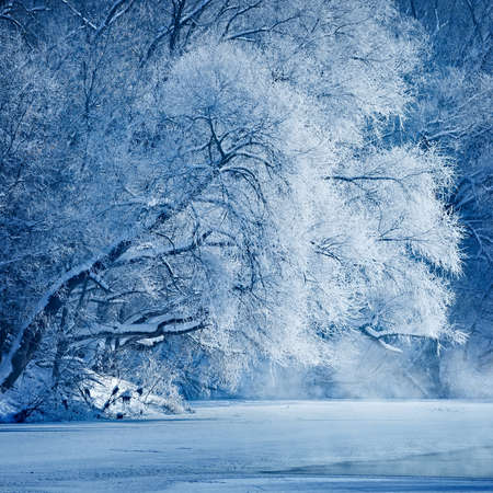 Trees covered with hoarfrost on the shores of an icy river. photo