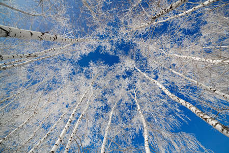 Trees covered with snow against the sky  photo