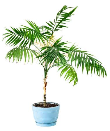 白い背景で隔離の室内用植物