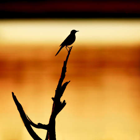 silhouette of the bird on the background of the river  photo