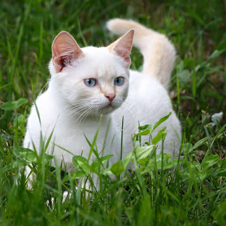 Young cat playing in green grass at park.  photo