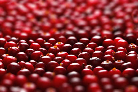 Ripe cranberries for background photo