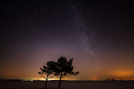 growing together: Two trees are growing together on the background of the starry sky and the Milky Way. Stock Photo