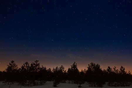 夜の星空の背景の木 写真素材