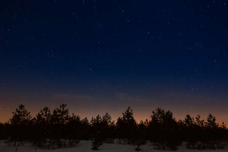 Trees on a background of the night starry sky 免版税图像