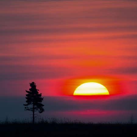 Viejo árbol contra el sol de la mañana. Amanecer.