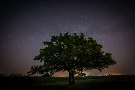 Oak tree with green leaves on a background of the night sky and the Milky Way. Stock Photo