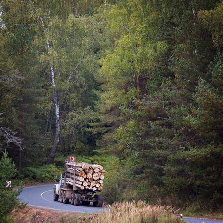 logging truck: Transportation of logs of prepared on forest road