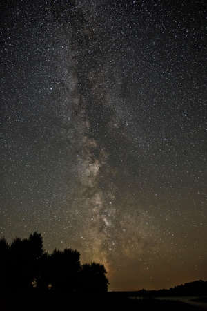 researches: Trees on a background of the night sky and the Milky Way.