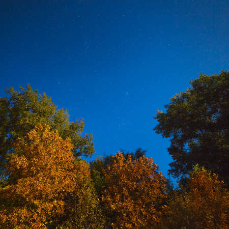 researches: Yellowed autumn forest in the night starry sky. Photographed at the full moon. Stock Photo