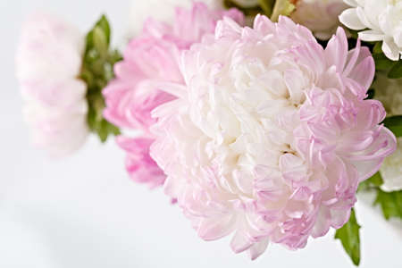 large: Bright garden blooming flowers, photographed large. Stock Photo
