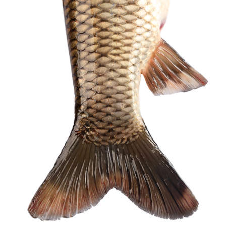 grass carp: The tail of the fish carp isolated on white background Stock Photo