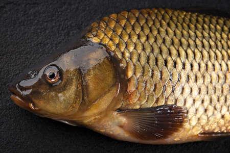 gills: Head carp fish on the surface of dark stone.
