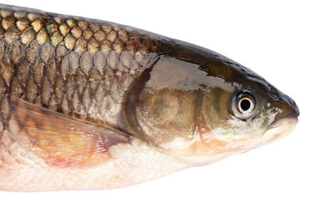 grass carp: Fish head grass carp isolated on white background. Stock Photo
