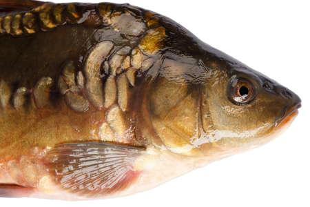 squama: Head fish carp isolated on white background