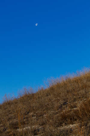 The bright moon in the clear sky during the daytime is low above the horizon.
