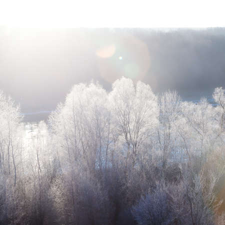 Hoarfrost on frozen trees is illuminated by the rays of the sun at dawn.