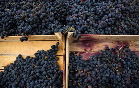 juicy: Tasty juicy grapes in wooden boxes