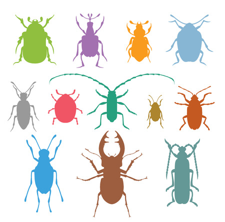 insect mosquito: Colorful insects vector collection.  Illustration
