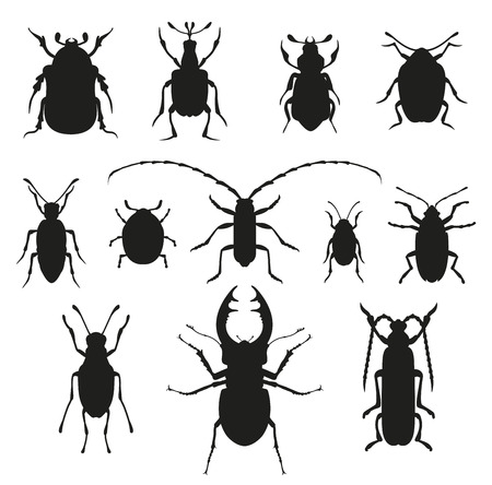ladybird: Colorful insects vector black and white collection.