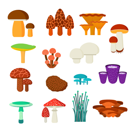 edible mushroom: Mushrooms illustration set. Different types of mushrooms isolated on white background. Nature mushrooms for cook food and poisonous mushrooms flat style Illustration