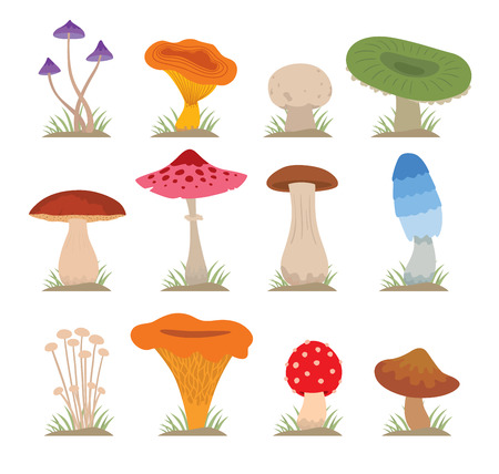 Mushrooms illustration set. Different types of mushrooms isolated on white background. Nature mushrooms for cook food and poisonous mushrooms flat style Çizim