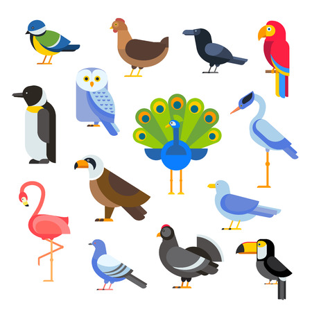 Birds vector set. Birds illustration. Egle, parrot. Pigeon and toucan. Bird collection. Penguins, flamingos. Crows and peacocks. Black grouse, chicken. Sofa and heron