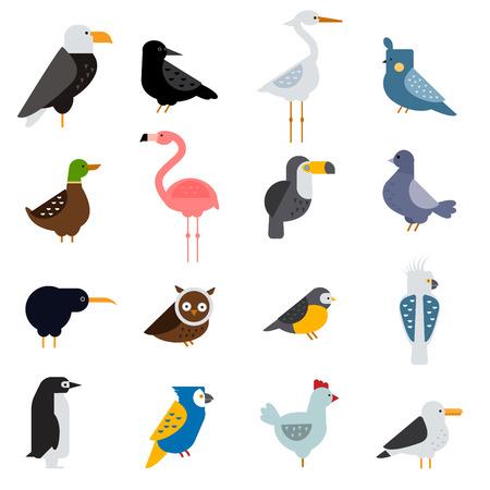 flamingos: Birds vector set. Birds illustration. Egle, parrot. Pigeon and toucan. Bird collection. Penguins, flamingos. Crows and peacocks. Black grouse, chicken. Sofa and heron