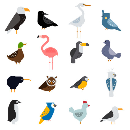paloma caricatura: Las aves conjunto de vectores. ilustración de las aves. Egle, loro. La paloma y el tucán. colección de aves. Pingüinos, flamencos. Los cuervos y los pavos reales. urogallo negro, pollo. Sofá y garza