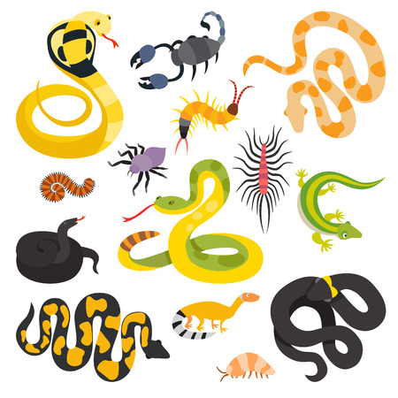 cartoon snake: Vector flat snakes collection isolted on shite background. Vector snakes flat style. Different snakes skin texture