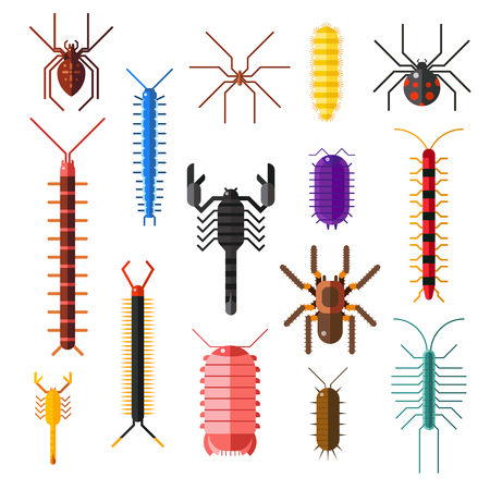 poisonous: Spiders and scorpions dangerous insects animals vector cartoon flat illustration. Asia and Africa scorpions and other poisonous animals