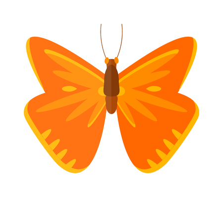 brassicae: Flat butterfly vector. Flat butterfly isolated on white background. Flat butterfly vector illustration. Colored flat butterfly isolated on white background.