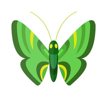 brassicae: Flat butterfly vector. Flat butterfly isolated on white background. Illustration