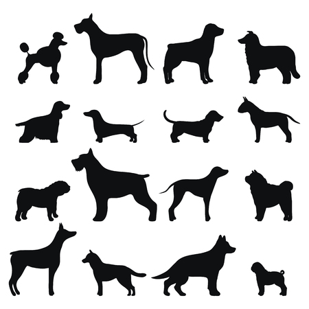 labrador puppy: Dog breed vector black silhouette.