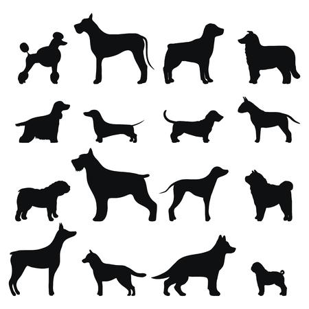 Chien: vecteur de race de chien de silhouette noire.