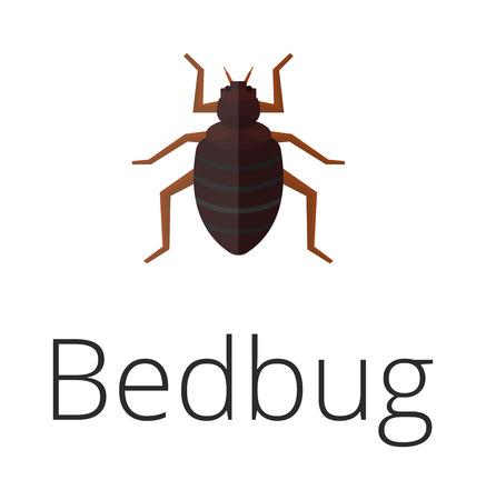 parasitic infestation: Bedbug parasite vector illustration. Illustration